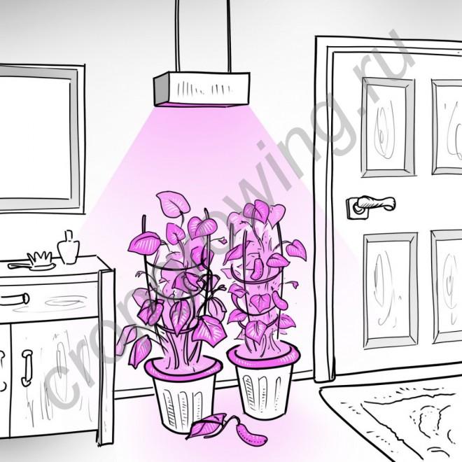 """Лампа для освещения оранжереи с мощным линзованым фито светодиодом 50 Вт """"Капелла"""""""